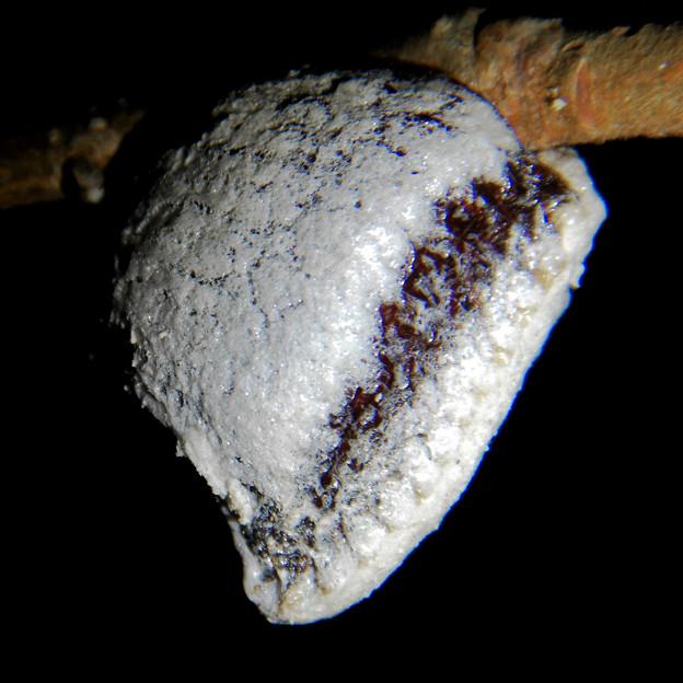 西高森山の木にくっついてた謎の白い塊 - 3