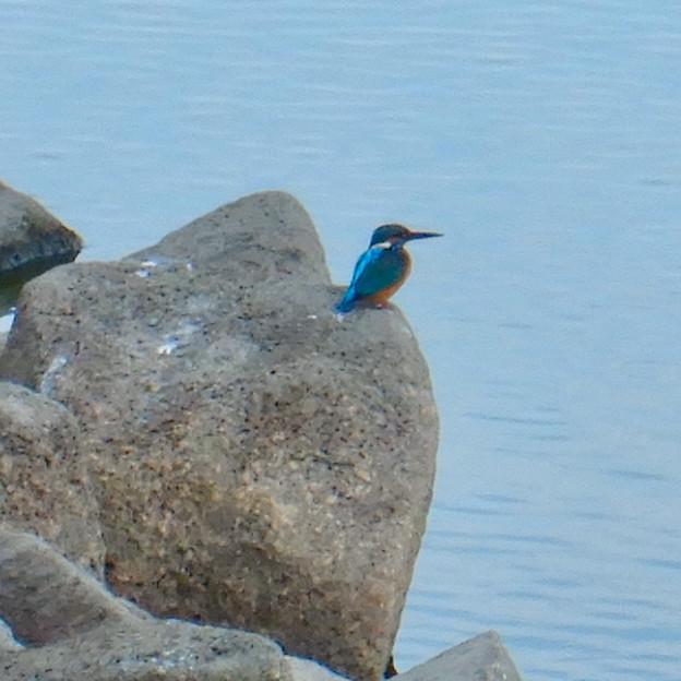 落合公園の池沿いにいたカワセミ - 6