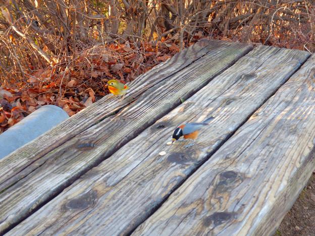 弥勒山山頂にいた鳥 - 6:ピーナッツを食べにきたソウシチョウとヤマガラ