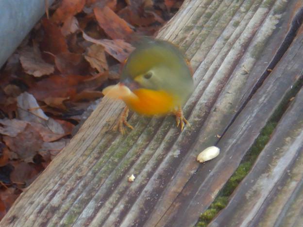 弥勒山山頂にいた鳥 - 10:ピーナッツをくわえるソウシチョウ