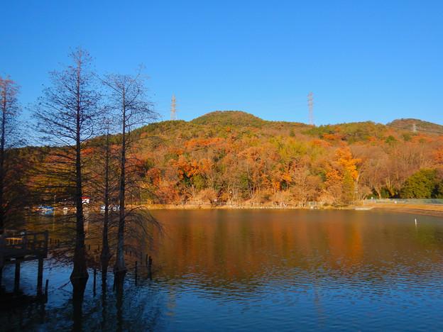 大久手池沿いから見た紅葉した冬の大谷山