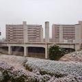 雪の大晦日に撮影した解体工事中の旧・桃花台東駅 - 2