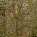Photos: 築水池沿いで見かけた1mくらいの羽の長さがある大きな鳥 - 1