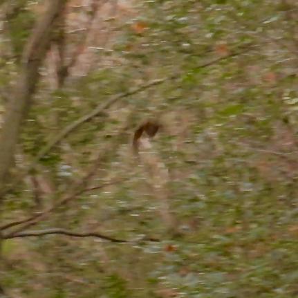 築水池沿いで見かけた1mくらいの羽の長さがある大きな鳥 - 2