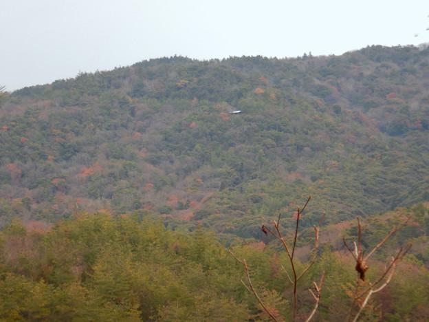築水池沿いから見た弥勒山中腹の休憩所