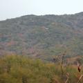 Photos: 築水池沿いから見た弥勒山中腹の休憩所