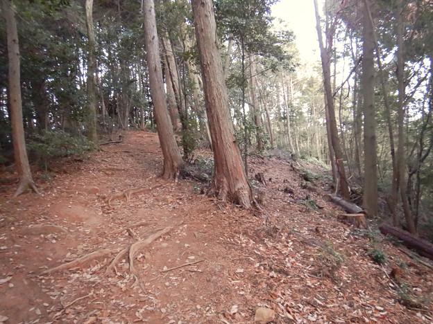 ふれあいの森:工事用モノレールが撤去(2021年1月) - 3