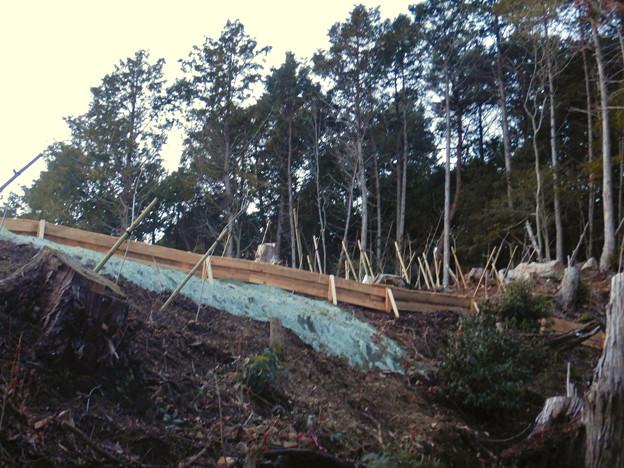 完成したと見られる、ふれあいの森のリニア中央線用の送電線鉄塔 - 7:新たに植林された苗木?