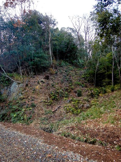 ふれあいの森:工事用モノレールが撤去(2021年1月) - 2