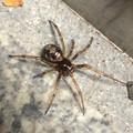 Photos: 小さいまだらな蜘蛛 - 2