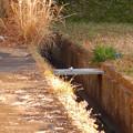 Photos: 用水路沿いにいたセグロセキレイ - 9