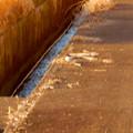 Photos: 用水路沿いにいたセグロセキレイ - 16