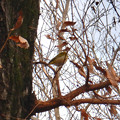 Photos: 木の上にいたメジロ - 1