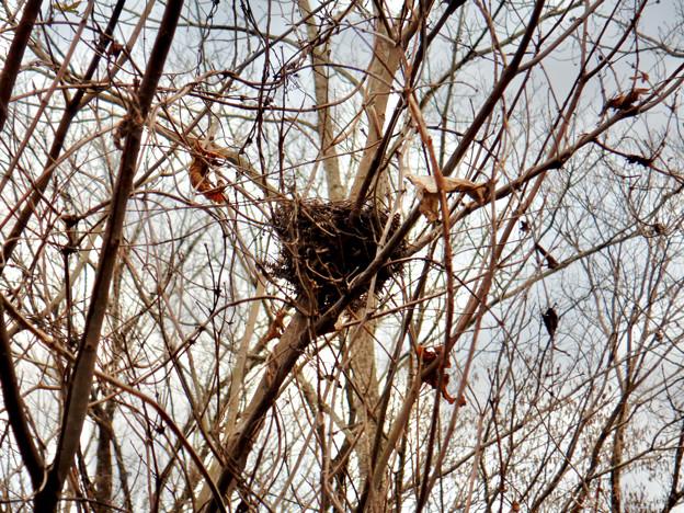 西高森山:木の上にあった鳥の巣?