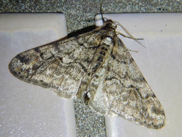 真冬の公園トイレにいた蛾