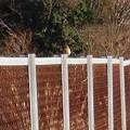 Photos: 太良池沿いにいた薄茶色い小さな鳥 - 1
