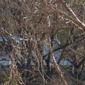 Photos: 太良池沿いにいた薄茶色い小さな鳥 - 2