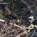 Photos: 木の上で喧嘩していたカワウ - 2