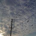 朝焼けに染まる空とカラスの群れ