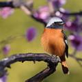 写真: 春っぽい♪