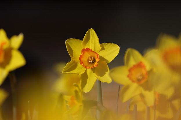 黄色いラッパ~