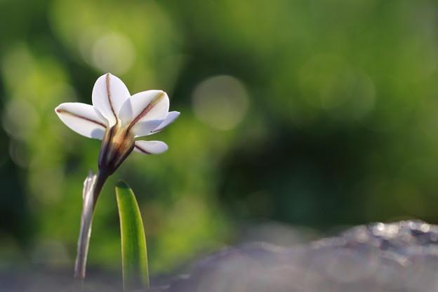 待ちに待った春