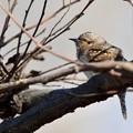 写真: 枝留まりのアリちゃん