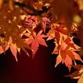 Photos: 紅葉も終わり