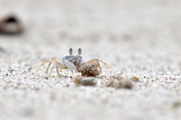 Photos: 小さな蟹