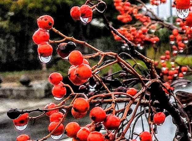 赤い木の実
