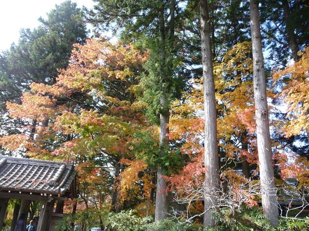 箱根 長安寺の紅葉