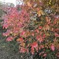 Photos: 庭の紅葉