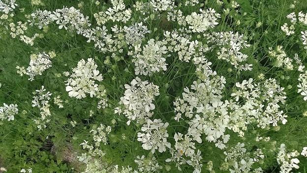 オルレアの花々