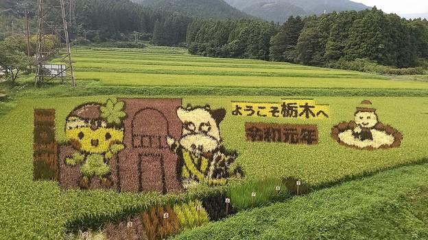 「令和元年」の田んぼアート