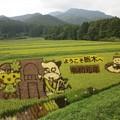 Photos: 那須塩原の田んぼアート