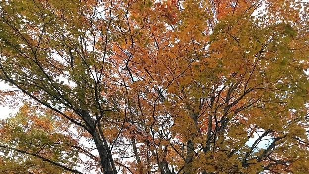 中禅寺湖の紅葉