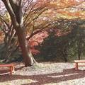 Photos: 佐久山御殿山公園