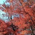 Photos: 御殿山公園の紅葉3