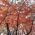 Photos: 御殿山公園の紅葉2
