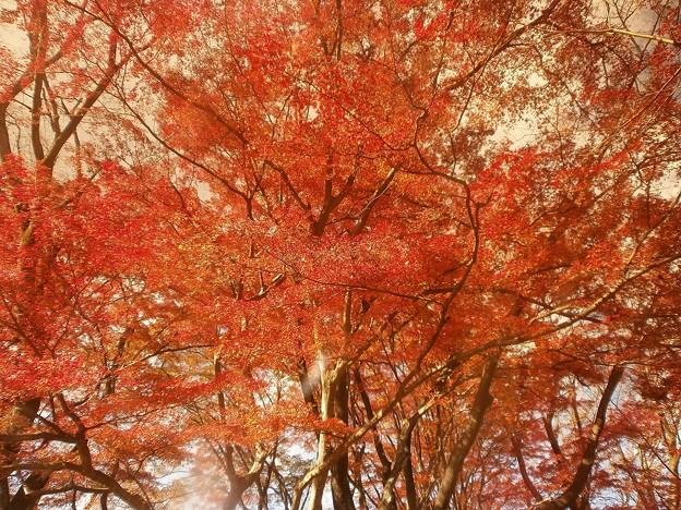 サングラス越しの紅葉