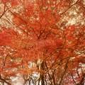 Photos: サングラス越しの紅葉