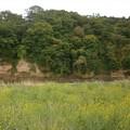 初夏の河原1