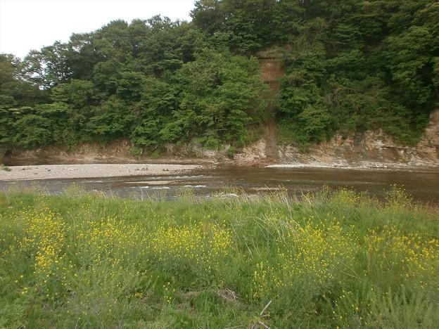 初夏の河原2