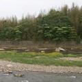 初夏の河原3