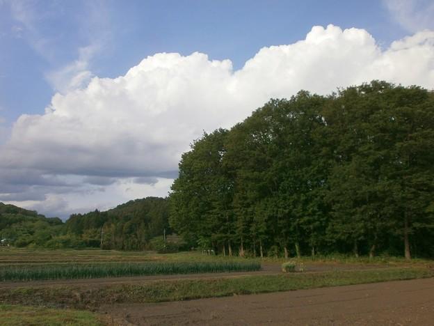 田園と雑木林