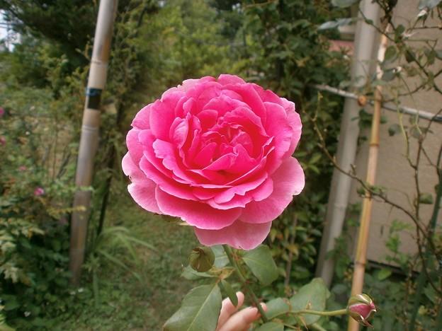 Rose2020_5