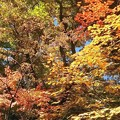 Photos: 日光市の紅葉