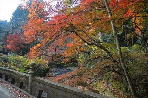 武茂川と紅葉