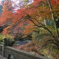 Photos: 武茂川と紅葉