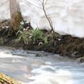 写真: 雪解け水と残雪